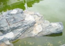 龟型石图片