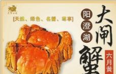 阳澄湖大闸蟹 宣传单矢量图图片